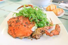 Pepper crab or stir fried crab Stock Photography