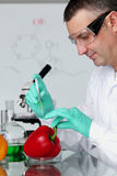 Pepper DNA change. Microbiology experimant Stock Photo
