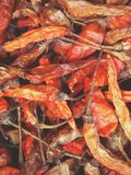 Pepper dry. Royalty Free Stock Images