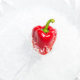 Pepper falling and splashing into water Royalty Free Stock Photography
