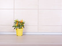Pepper in flower pot on kitchen counter Stock Photography