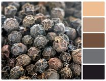 Pepper grain texture with palette color swatches Stock Images