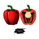 Pepper hand drawn vector illustration. Vegetable Isolated object half and full. Royalty Free Stock Photo