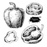 Pepper hand drawn vector set. Vegetable engraved style object, f. Ull, half and slices.  bell pepper. Detailed vegetarian food drawing. Farm market product Royalty Free Stock Photos