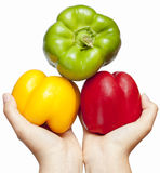 Pepper on hands. Three juicy, ripe peppers kept in women's hands royalty free stock photography