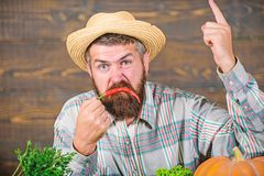 Pepper harvest concept. Bearded farmer hold chilli red pepper. Farmer angry hot chilli pepper wooden background. Rustic. Farmer straw hat likes spicy taste. Man stock photo