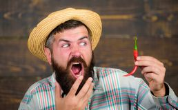Pepper harvest concept. Rustic farmer in straw hat likes spicy taste. Man hold pepper harvest. Bearded farmer hold. Pepper in hand. Farmer presenting hot chilli stock photos