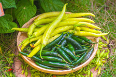 Pepper it is hot and spicy. Stock Images