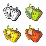 Pepper illustration Royalty Free Stock Photography