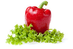 Pepper with litho of the salad. Red juicy pepper with litho of the salad Royalty Free Stock Photos