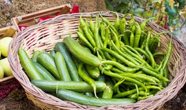 Pepper and cucumber in the basket stock photos