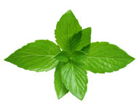 Pepper Mint Royalty Free Stock Photos