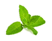 Pepper mint leaves Royalty Free Stock Images
