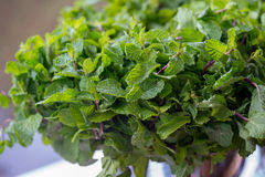 Pepper Mint Leaves. Fresh pepper mint leaves in a bunch royalty free stock photo