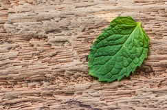 Pepper mint leaves on wood background Stock Photography
