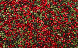 pepper mix texture Stock Photography