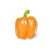 Pepper orange sweet color sketch draw isolated Stock Image