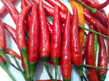 The pepper Royalty Free Stock Photos