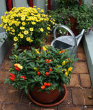 A pepper plant and a watering can Royalty Free Stock Images