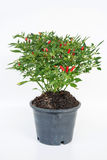 The Pepper Pot Royalty Free Stock Photos