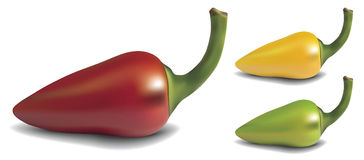 Pepper. Realistic red, yellow and green  pepper on white background Stock Image