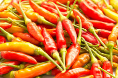 Pepper red. Big red peppers in thailand Royalty Free Stock Photos