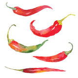 Pepper. Set of red chili pepper drawing by watercolor, hand drawn vector illustration Royalty Free Stock Photography