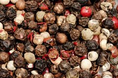 Pepper spice Stock Images