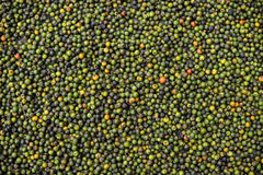 Pepper spice Cambodian Stock Images