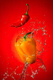 Pepper Splash Stock Image