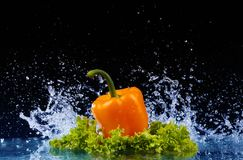 Pepper in spray of water. Juicy pepper with splash. On black background royalty free stock photos