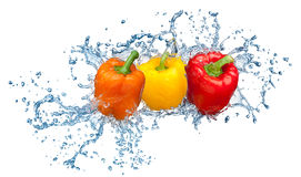 Pepper in spray of water. Royalty Free Stock Photo