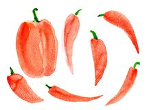 Pepper sweet big red. Watercolor, on white background, isolated Stock Images