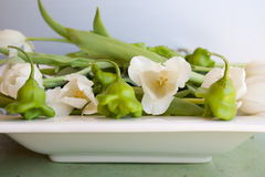 Pepper tulip salad. Peppers and tulips in a white rectangular bowl Stock Photos