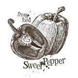 Pepper vector logo design template. fresh Stock Image