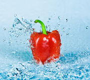 Pepper and water Royalty Free Stock Photos