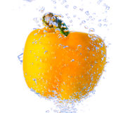 Pepper in water Stock Image