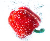 Pepper in water Royalty Free Stock Images