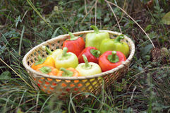 pepper in wooden basket Stock Image