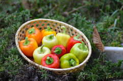 pepper in wooden basket Royalty Free Stock Photography