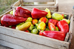 Pepper in the wooden box. Multicolor Pepper in the wooden box royalty free stock image