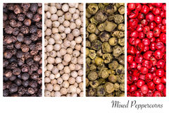 Peppercorn collage Royalty Free Stock Image