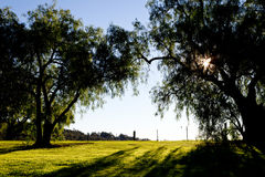Peppercorn trees back lit by early morning sun in country royalty free stock photo