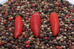 Peppercorns and Chillies Stock Photography