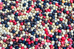 Peppercorns. Coloured assortment of dried peppercorns Royalty Free Stock Photography