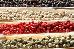 Peppercorns Spices sea shells Royalty Free Stock Images