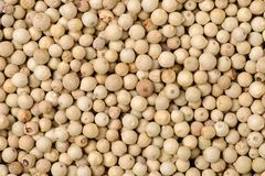 Peppercorns white feature. Background isolation Stock Images