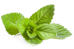 Peppermint. Fresh mint isolated on white background royalty free stock photo