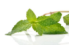 Peppermint. Fresh peppermint on white background stock photo