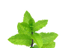 Peppermint Foto de Stock Royalty Free